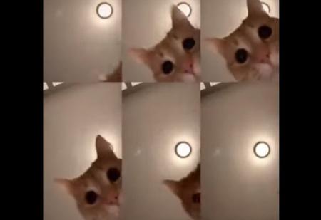 Кот в вирусном ролике стал звездой Интернета (смотреть со звуком)