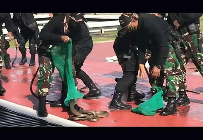 Фото №1 - Дичайшее видео: спецназ в Индонезии ест змей живьем!
