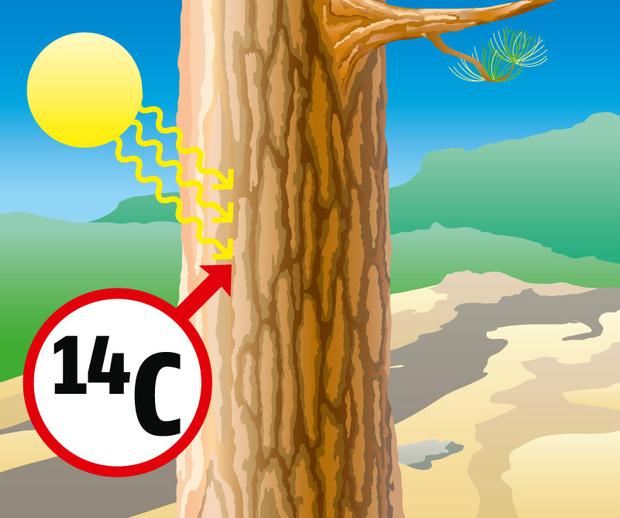 Фото №1 - Как это работает: радиоуглеродная датировка