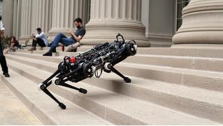 Робот дня от MIT: собака, но маленькая и слепая (ВИДЕО)