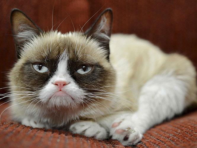 Grumpy сat