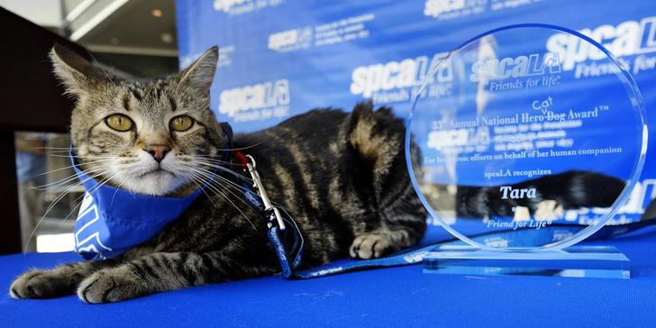 Фото №1 - 5 героических котов современности