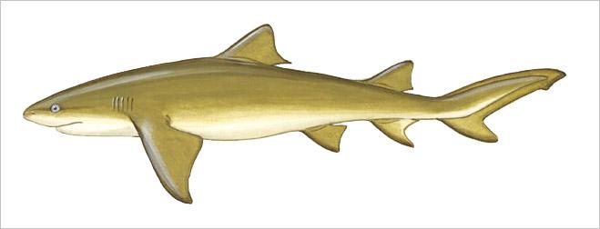 Фото №8 - Рыба-Гитлер. Исчерпывающий материал об акулах, после которого ты больше никогда не поедешь на море или океан