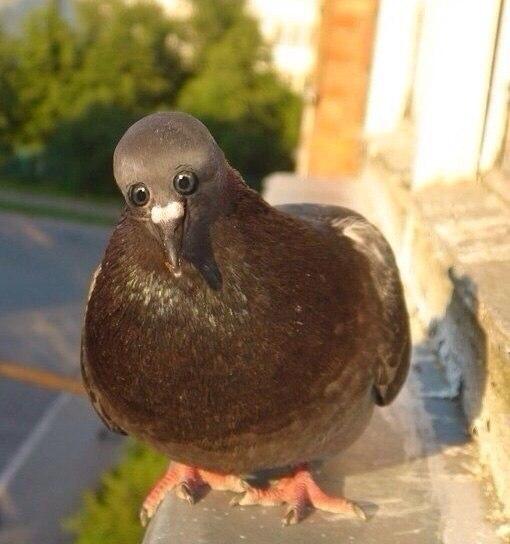 Фото №6 - Вот как выглядели бы животные, если бы глаза у них были спереди!