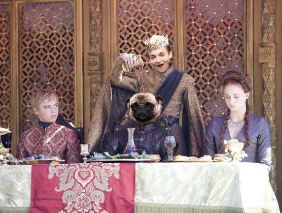 Фото №3 - Самые смешные фотожабы на короля Джоффри с мопсом
