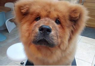 В Великобритании арестовали четырехмесячного щенка, укусившего полицейского. За пса вступились тысячи человек