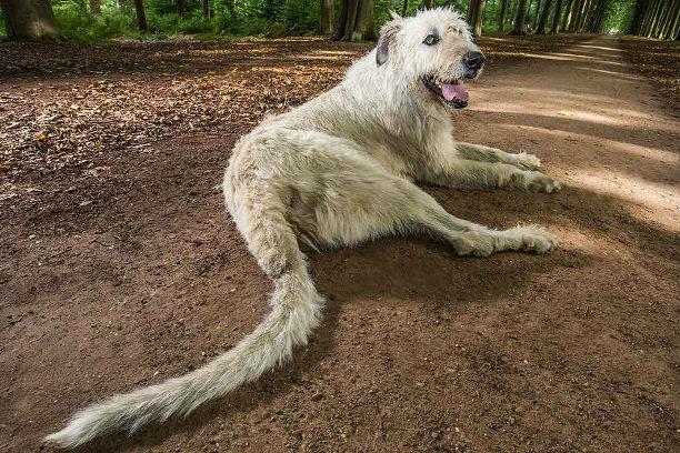 Фото №1 - Собака с самым длинным в мире хвостом побила мировой рекорд!