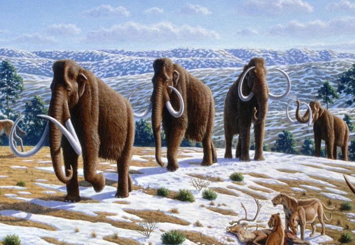Фото №1 - Мамонтов в массы! Ученые всерьез намереваются воскресить волосатых слонов
