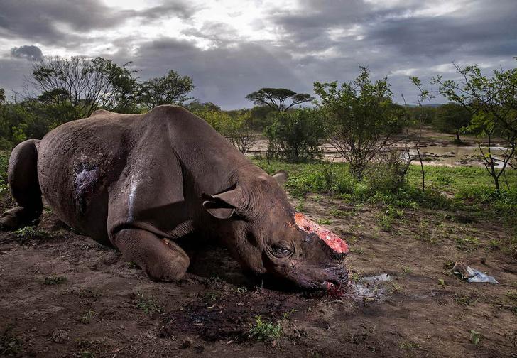 Фото №1 - Лучшие фотографии конкурса Wildlife Photographer of the Year 2017