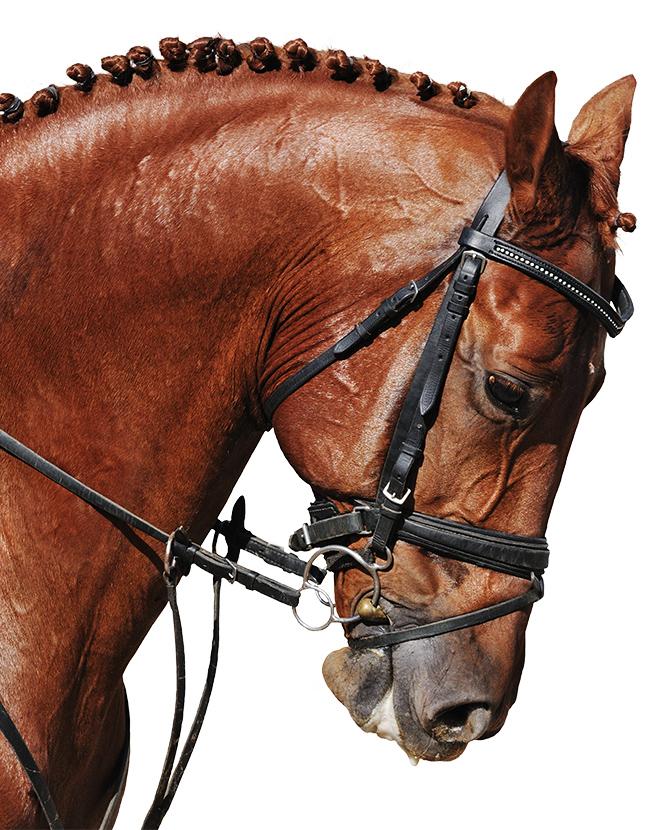 Фото №2 - Неожиданно захватывающая история происхождения лошадиных пород