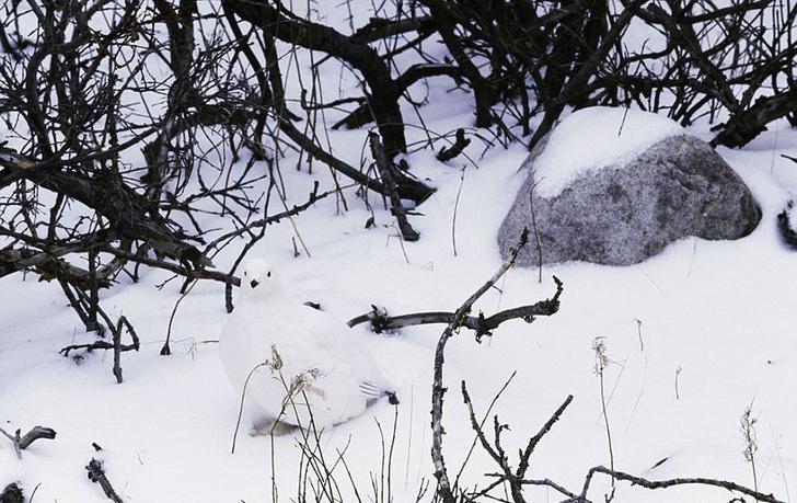 Фото №2 - Мимикрия на максималках: 14 фотографий, на которых умело спрятались животные