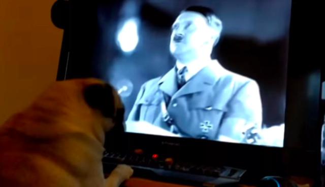 Фото №1 - Шотландец научил мопса нацистскому приветствию и попал под суд