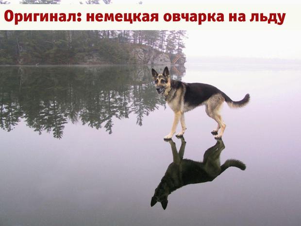 Фото №1 - Лучшие фотожабы года!