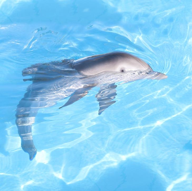 Фото №1 - Итак, ты встретил в море дельфина. Как понять язык его движений? Запоминай...