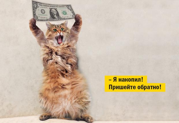 Фото №1 - Как заработать на котиках