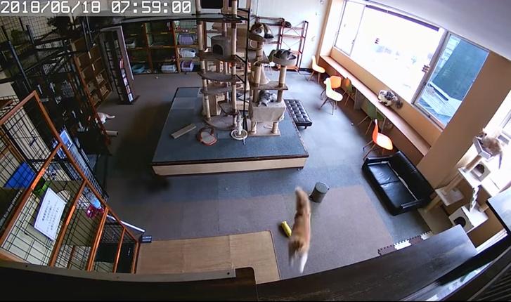 Фото №1 - Вот как коты реагируют на землетрясение! Стремительное ВИДЕО