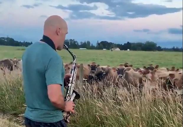 Фото №1 - Мужчина сыграл на саксофоне коровам, и их реакция стала вирусной в Интернете