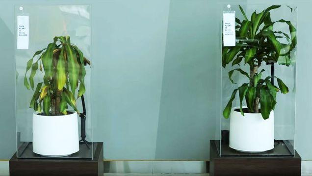 Фото №1 - IKEA учит школьников добру, предлагая унизить растение