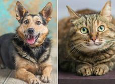 Котопёс недели: возьми из приюта собаку Есению или кошку Долли