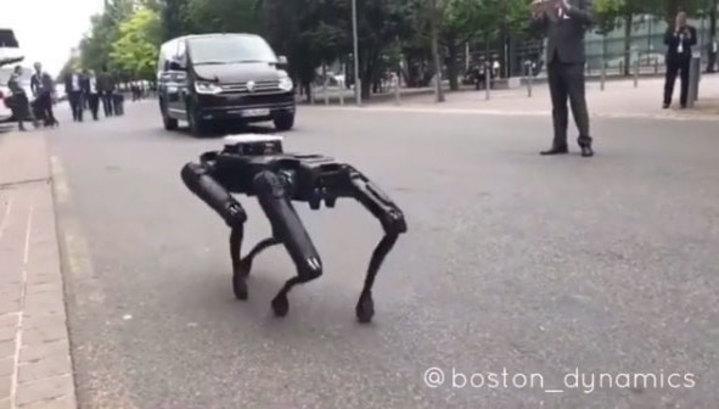 Фото №1 - Робособаки уже гуляют по улицам города! (ВИДЕО)