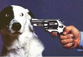 Как подраться с собакой и победить