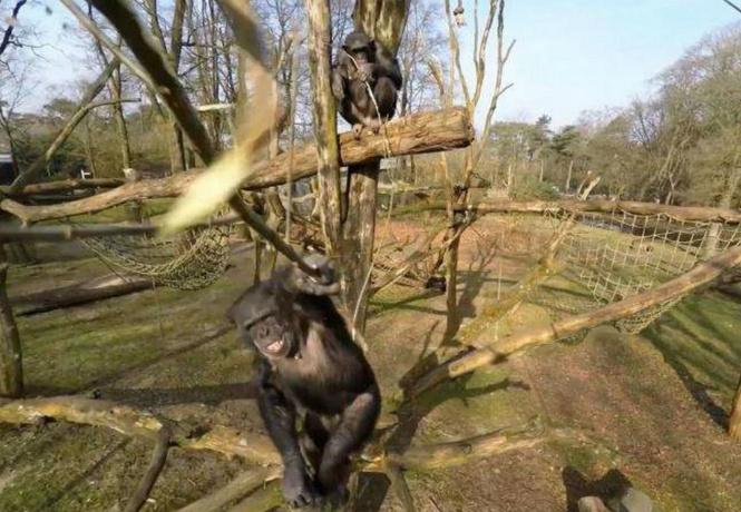 В зоопарке обезьяна расправилась с дроном с помощью обычной палки! Видео!