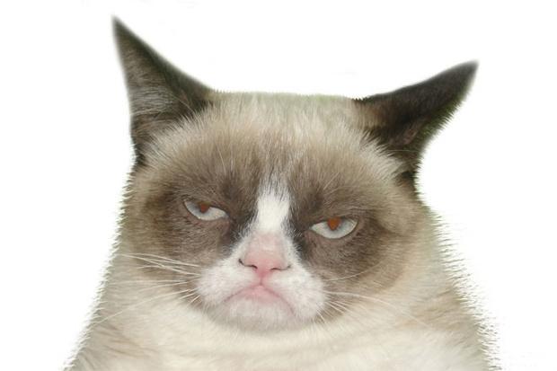 Фото №9 - Пушистая чума XXI века. Как коты захватили мир и Интернет