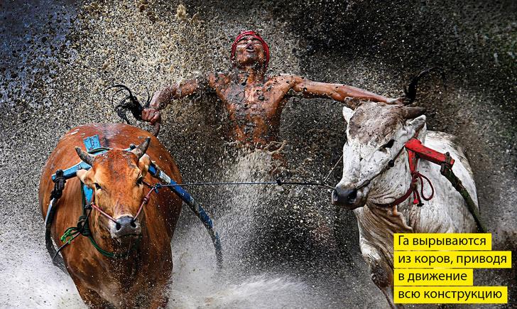Фото №1 - 12 самых необычных моментов 2013 года