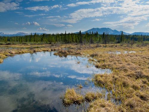 Фото №1 - Преодолеть болото