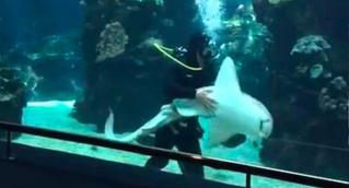 Оказывается, акула тоже может быть псом (ВИДЕО)