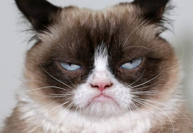 Фото №1 - Умерла легендарная сердитая кошка Grumpy Cat