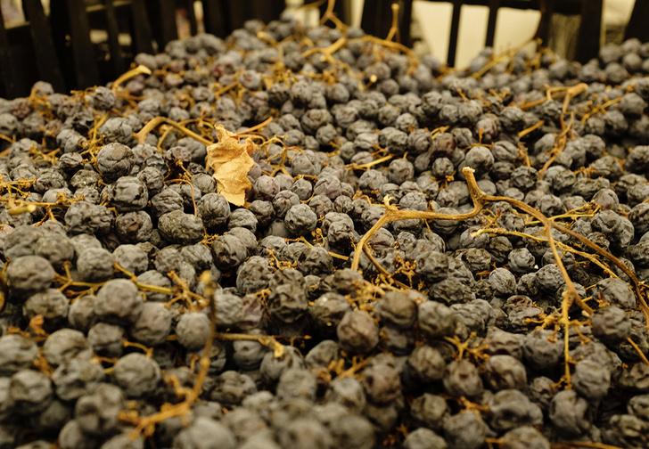 Фото №3 - Что такое вино сорта аппассименто, почему о нем стыдно не знать и с чем его лучше пить