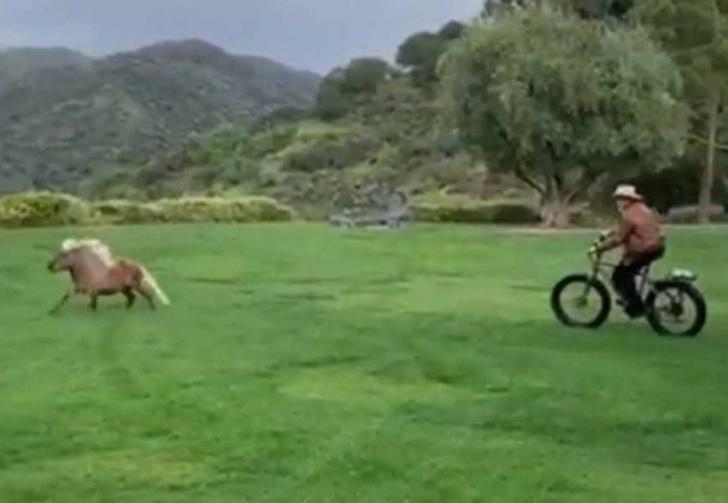 Фото №1 - Ничего необычного, просто Арнольд Шварценеггер гоняется на велосипеде за пони (видео)