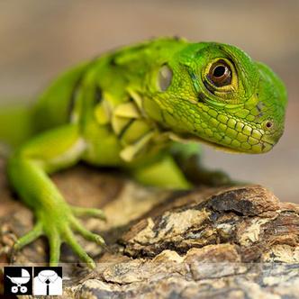 Фото №16 - Как выбрать домашнее животное в зависимости от типа твоего характера и размеров жилплощади