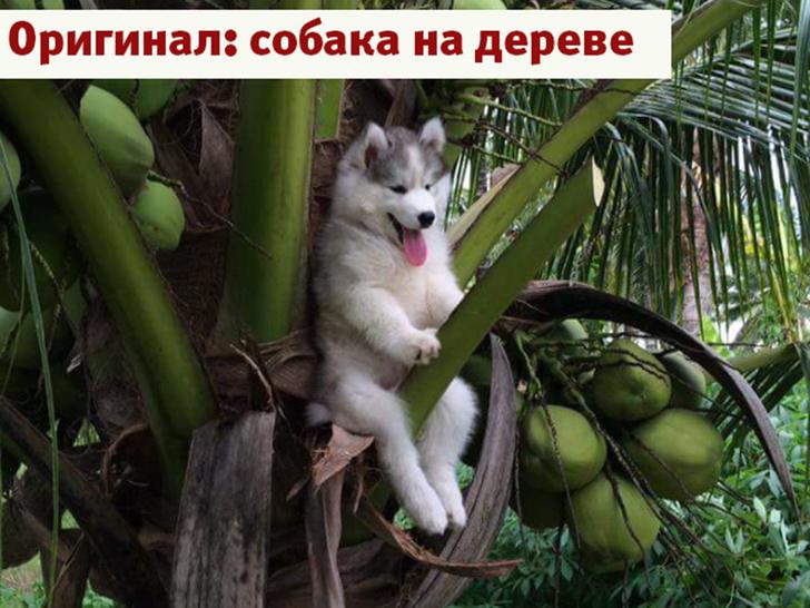 Фото №19 - Лучшие фотожабы года!