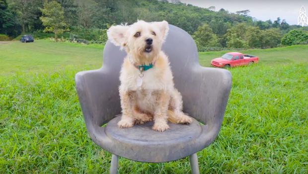 Фото №1 - Собачий рай: как выглядит приют для бездомных животных в Коста-Рике (ВИДЕО)