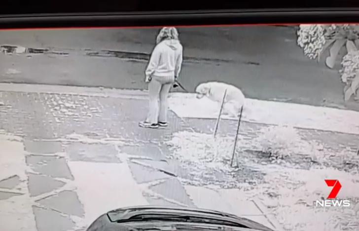 Фото №1 - Мужчина придумал оригинальный способ пристыдить собаководов, которые не убирают за собаками