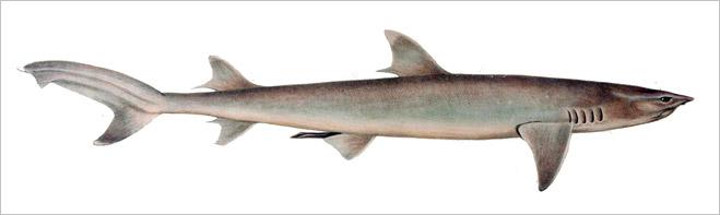 Фото №14 - Рыба-Гитлер. Исчерпывающий материал об акулах, после которого ты больше никогда не поедешь на море или океан