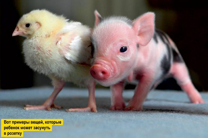 Фото №7 - Переполох в бестиарии: 10 неожиданных фотографий животных с историями
