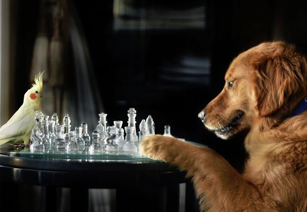 Фото №1 - Как занять свое животное