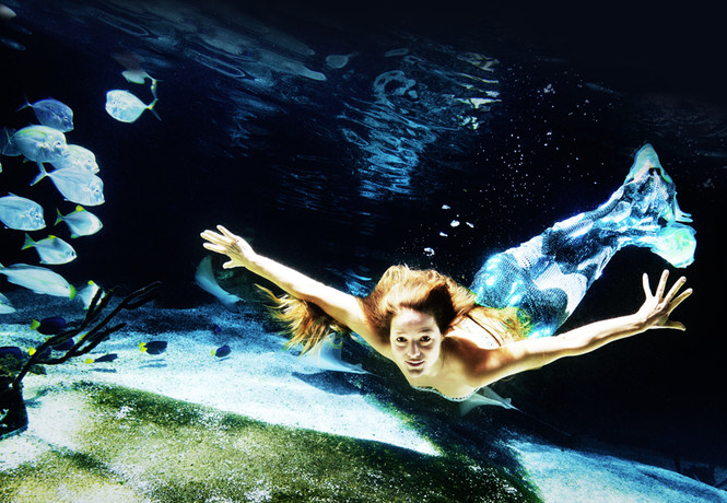 Как завести морской аквариум
