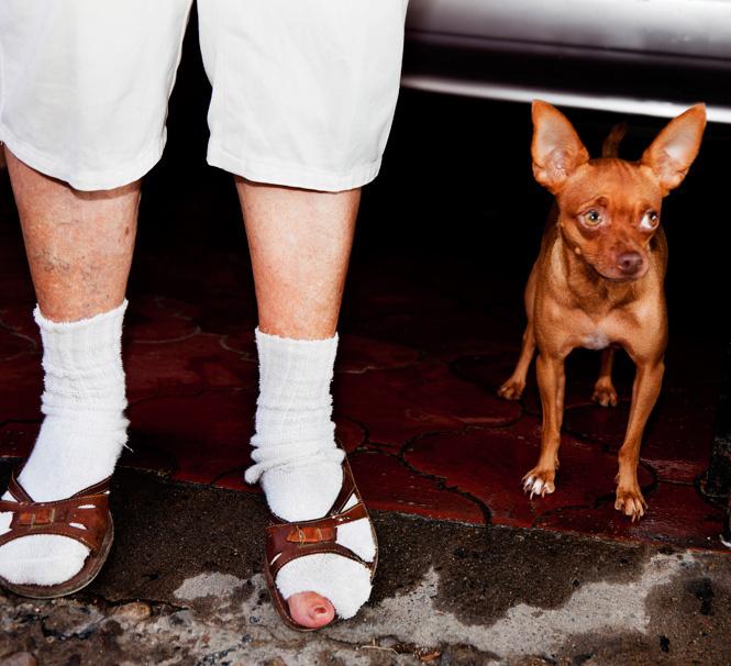 Носки и сандалии