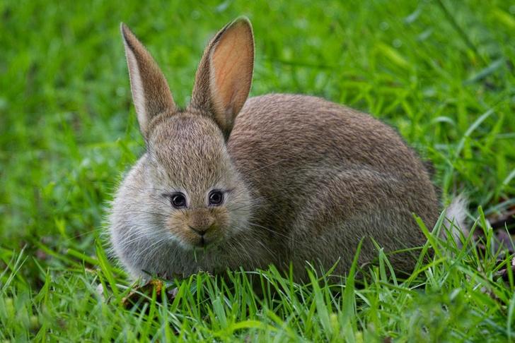 Фото №2 - Вот как выглядели бы животные, если бы глаза у них были спереди!