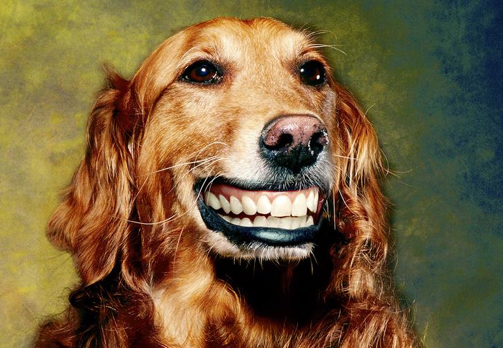 Фото №1 - Как понять язык собаки. Краткий человеко-собачий словарь