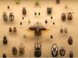 Легко: распознать жука-киборга