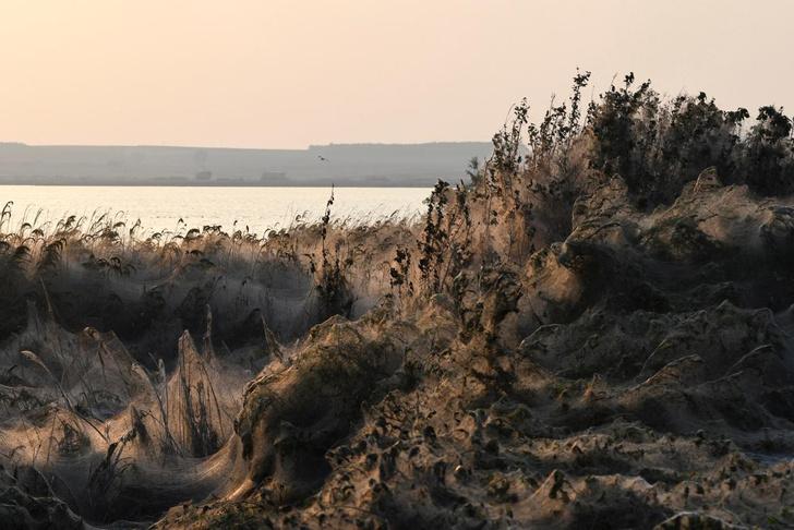 Фото №1 - Колония пауков в Греции накрыла паутиной квадратный километр земли (галерея)