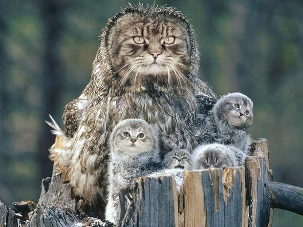 Фото №3 - Котосовы — лучшее, что не создала природа!
