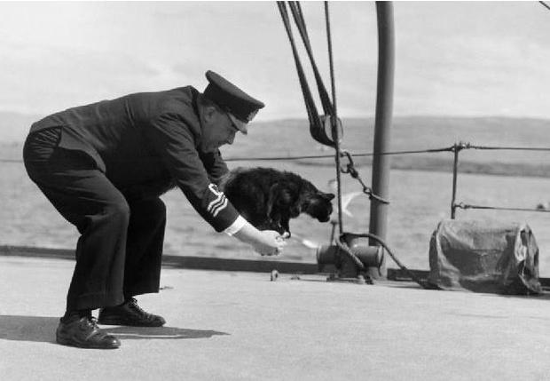 Фото №1 - Сэм— корабельный кот, который пережил три кораблекрушения