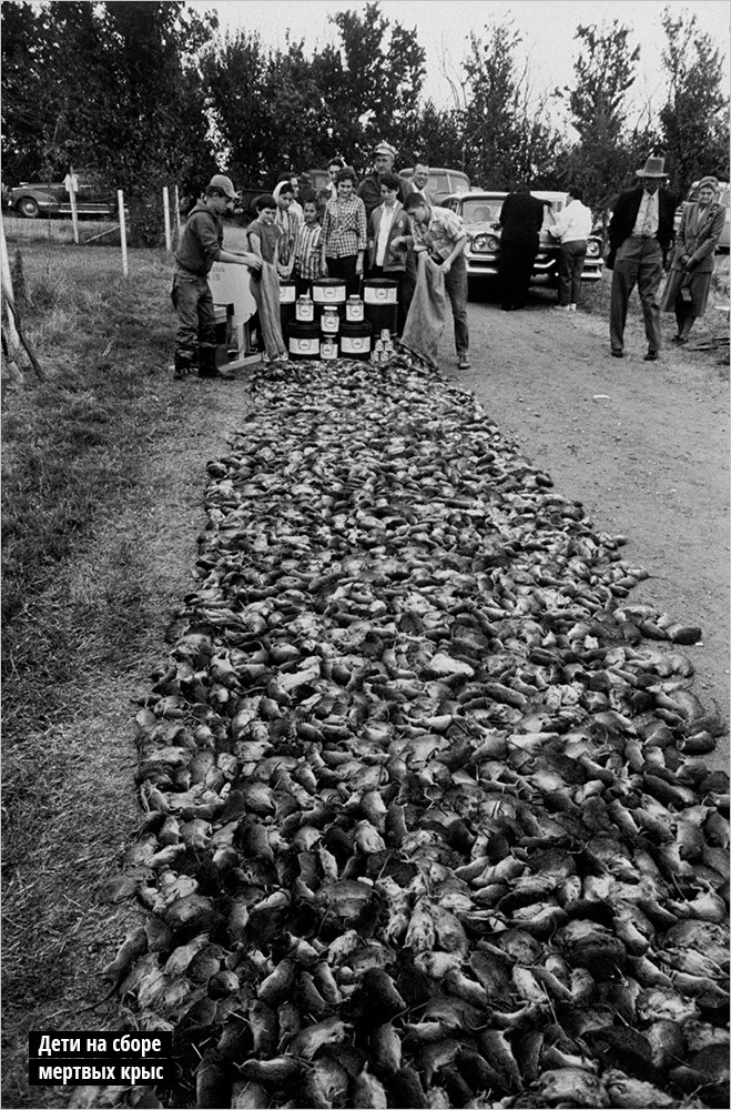 Дети на сборе мертвых крыс