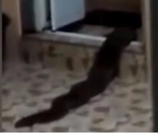 Господи! Что это было? Жуткий туалетный монстр, выползший из ванны, попал на видео!